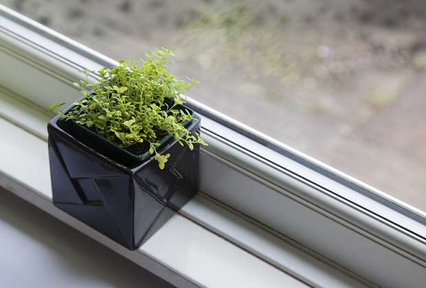 How To Grow Your Own Kitchen Garden By The Window