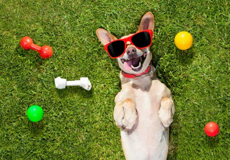 Treat Your Pooch To This Valentines Day Brunch In Mumbai