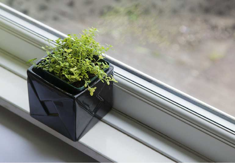 Create A Farm In Your Own Apartment
