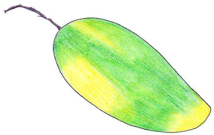 Dasheri Mango