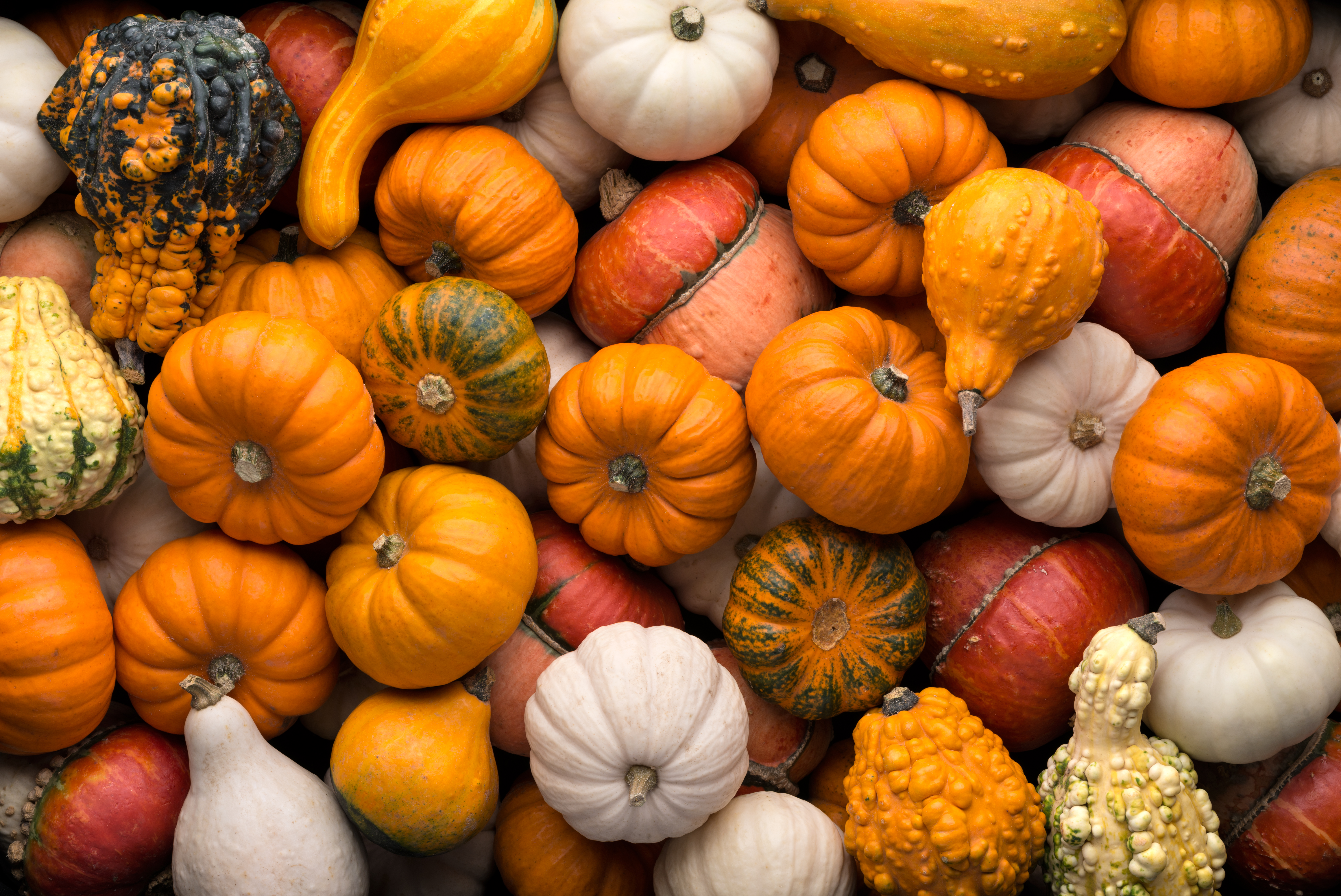 5 quirky pumpkin recipes to try this fall